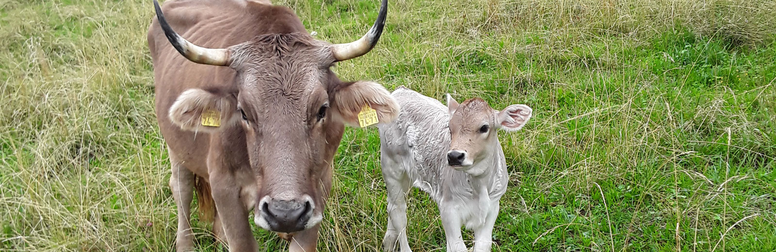 Unsere liebe Brotchorb-Kuh «Imelda»